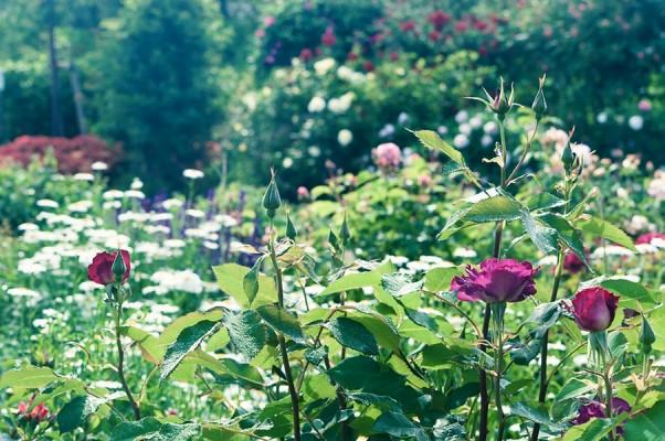 素敵な初夏の花