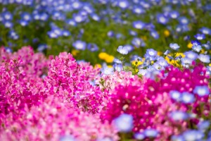 好きなお花たち