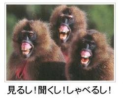 面白画像動物10