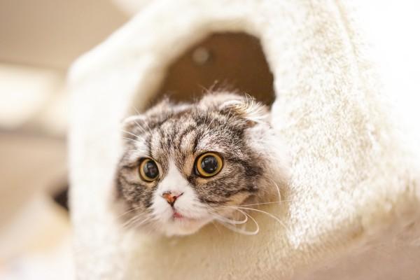 目がぱっちり猫