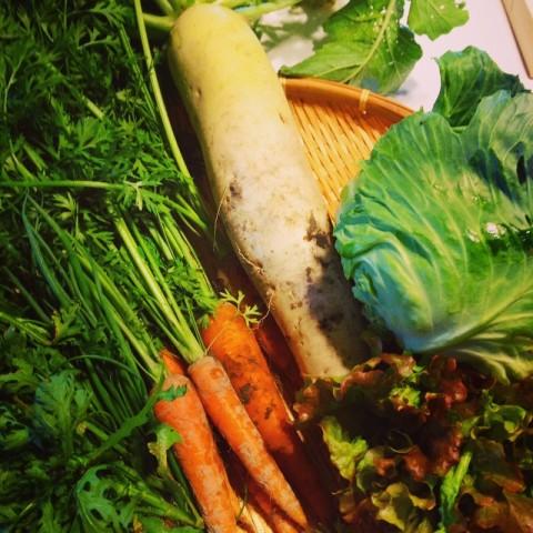 野菜3 (800x800)