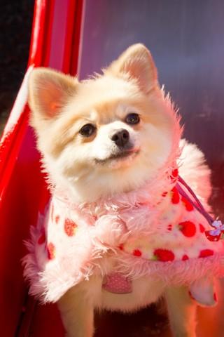 かわいい♡でも、おもしろい(笑)動物たちに癒される!5つのおすすめ動画